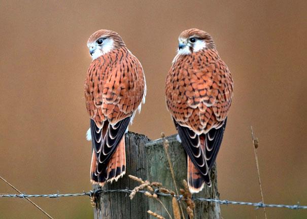фото животных и птиц