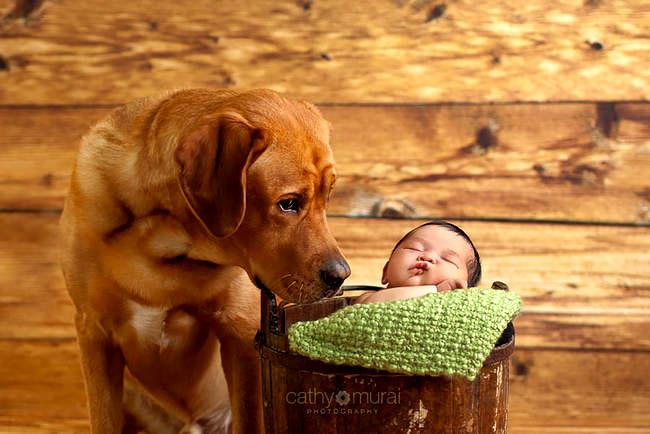 картинка собака для детей