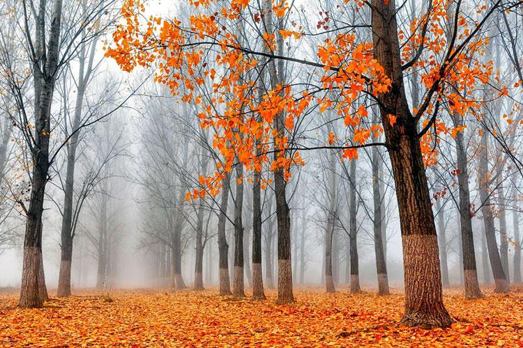 картинки осень октябрь