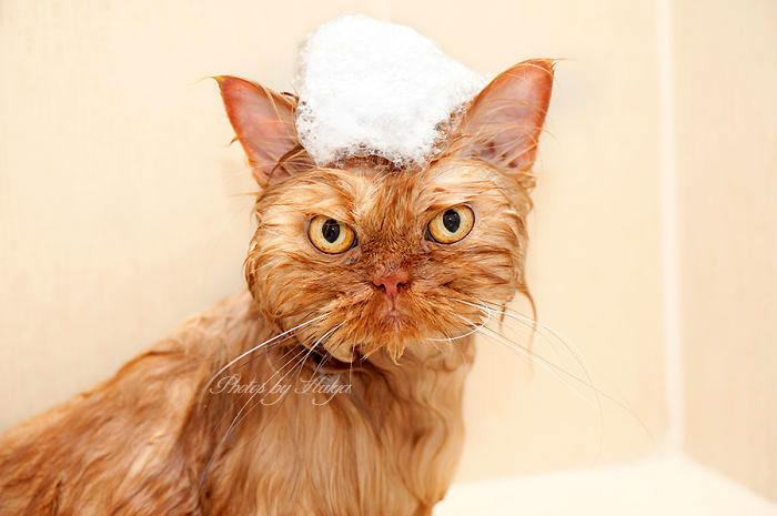 картинки рыжий кот
