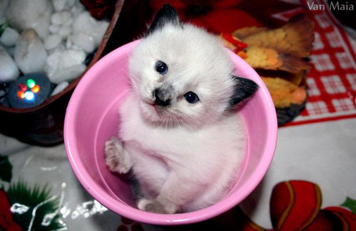 котенок в чашке