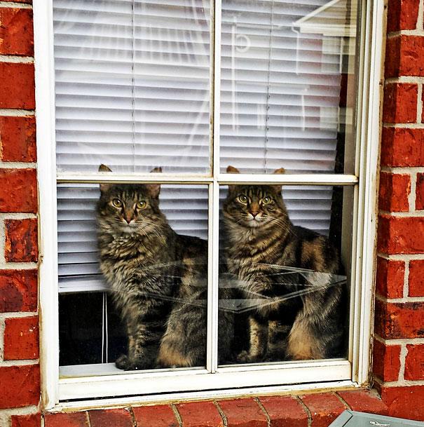 коты близнецы