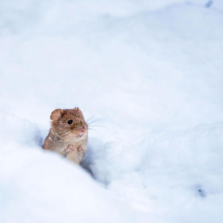 мыши прикольные