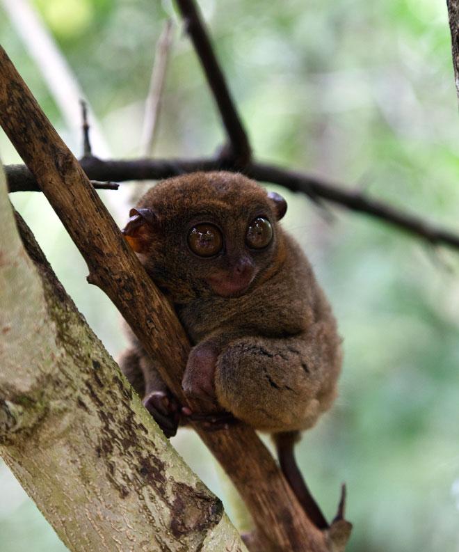 обезьяна большие глаза