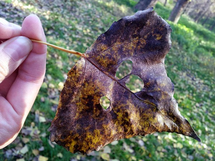 осенние листья фотографии