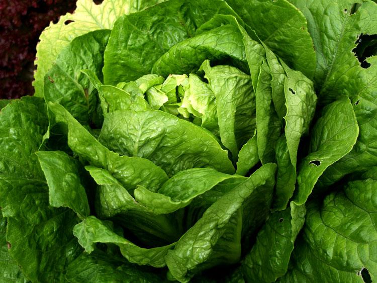 овощи полезные продукты