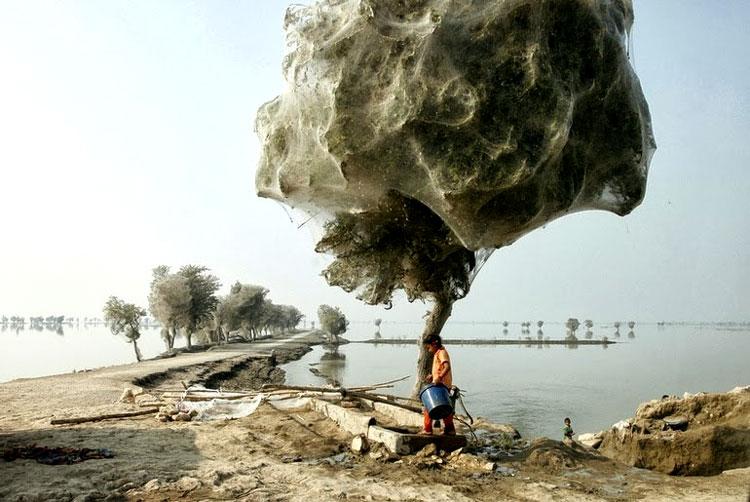 пауки на деревьях