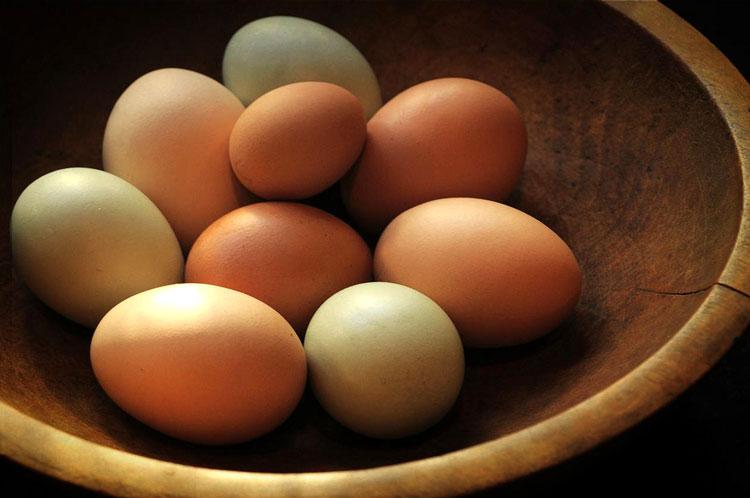 полезные ли яйца