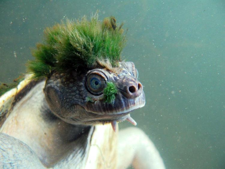причёска животное