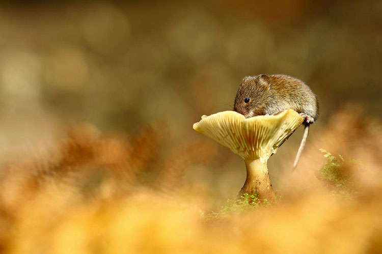 приключения мышки