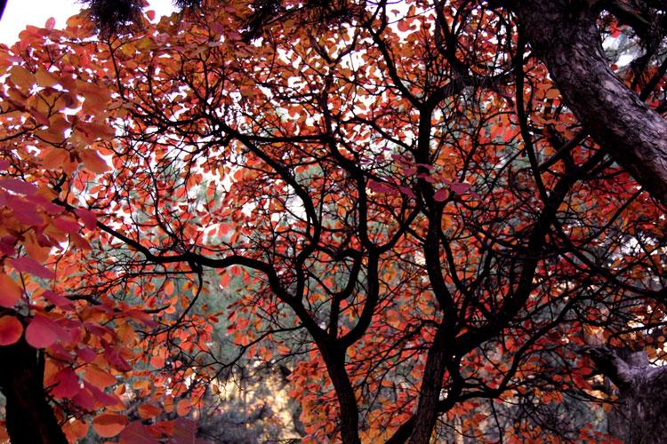природа осеннего леса