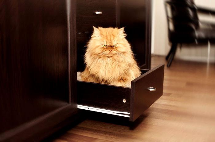 самый злой кот