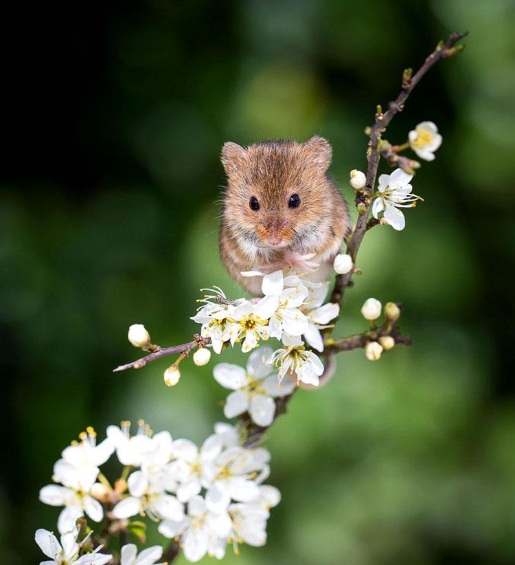счастливые мышки