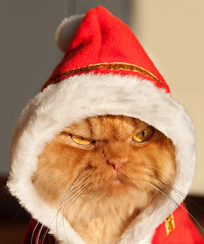 сердитый кот звезда интернета