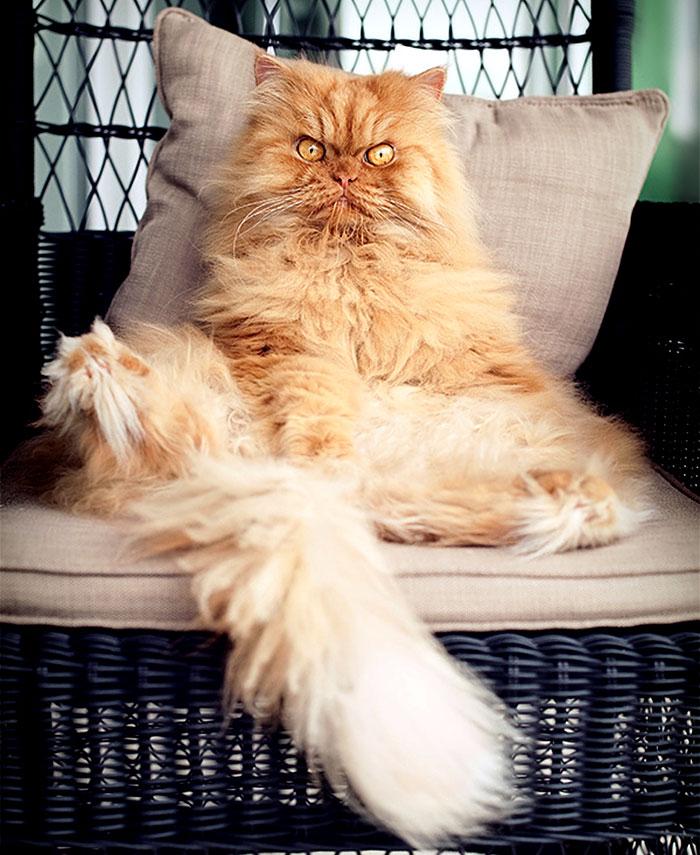 сердитый кот звезда интернета фото
