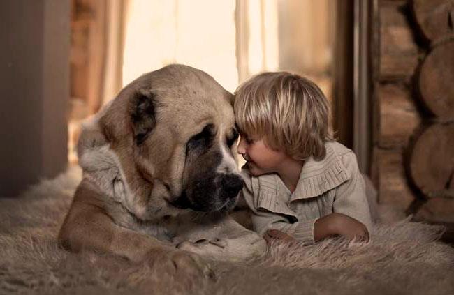 смотреть больших собак
