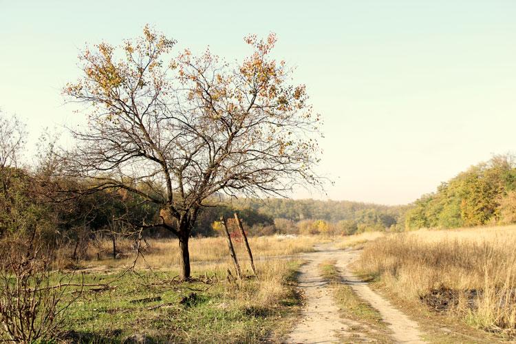 смотреть фото осень