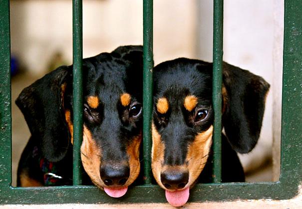 собака с языком фото