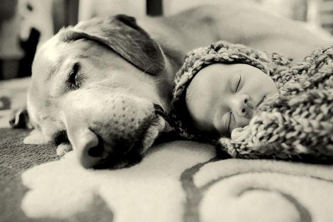 собаки кошки и дети