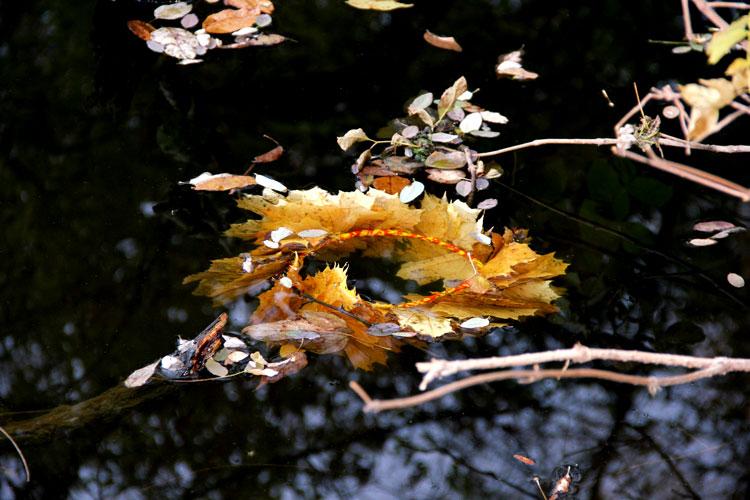 венок из листьев фото