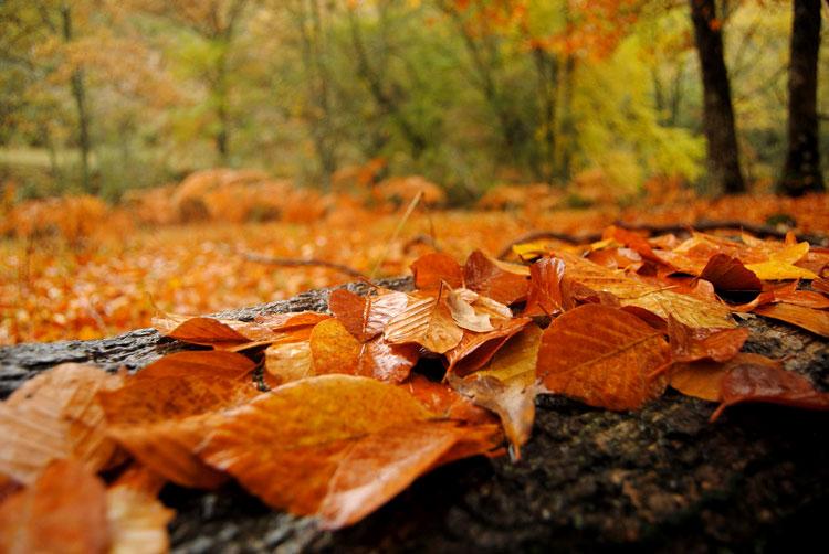 осенние листья красивые фото