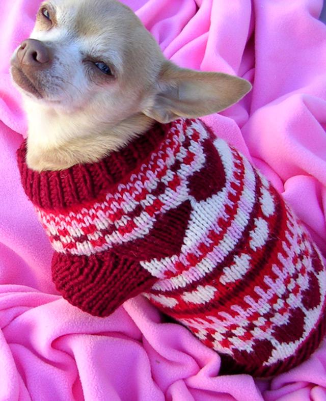 вязаная одежда для собак фото