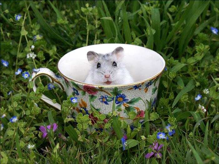 забавная мышка