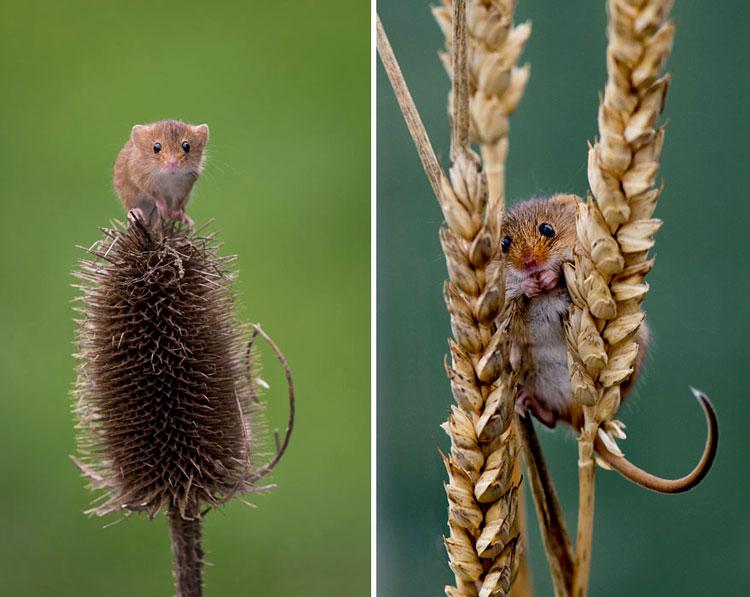 жизнь мышей