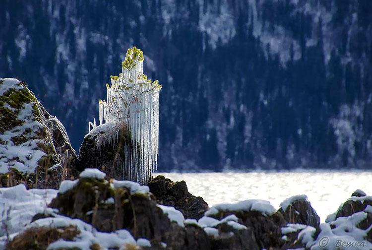 деревья зимой картинки