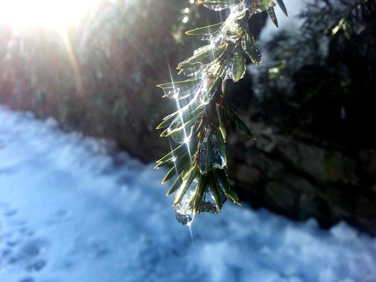фото деревья зимой