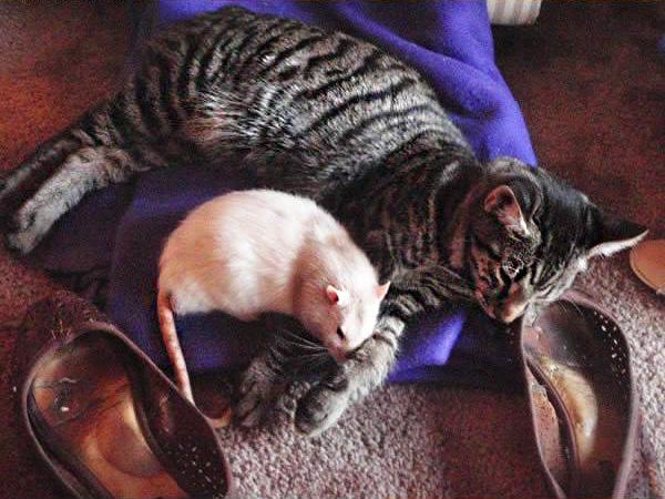 фото кошки и мышки