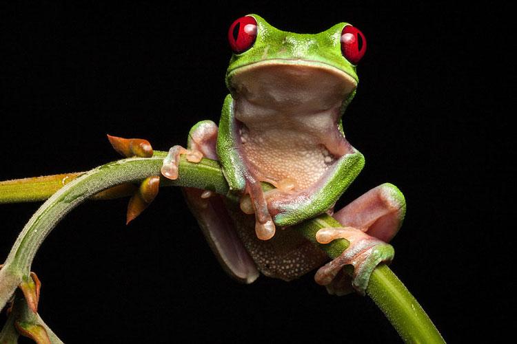 фото лягушек красивых