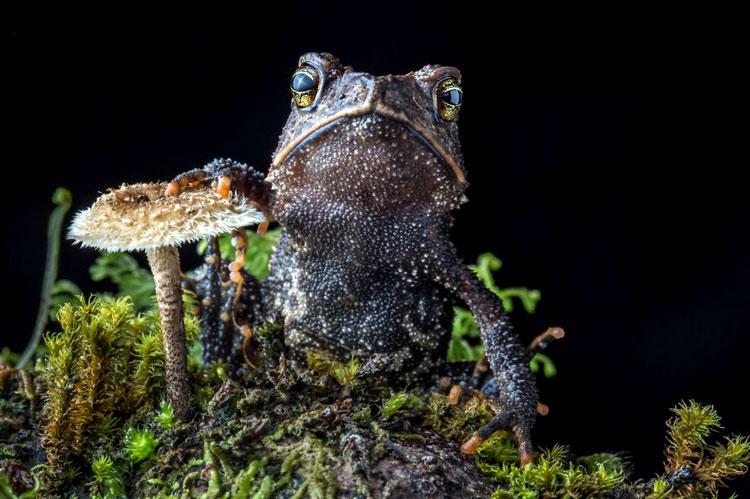 фото лягушки и жабы