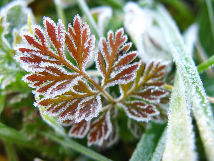 фото на тему зима