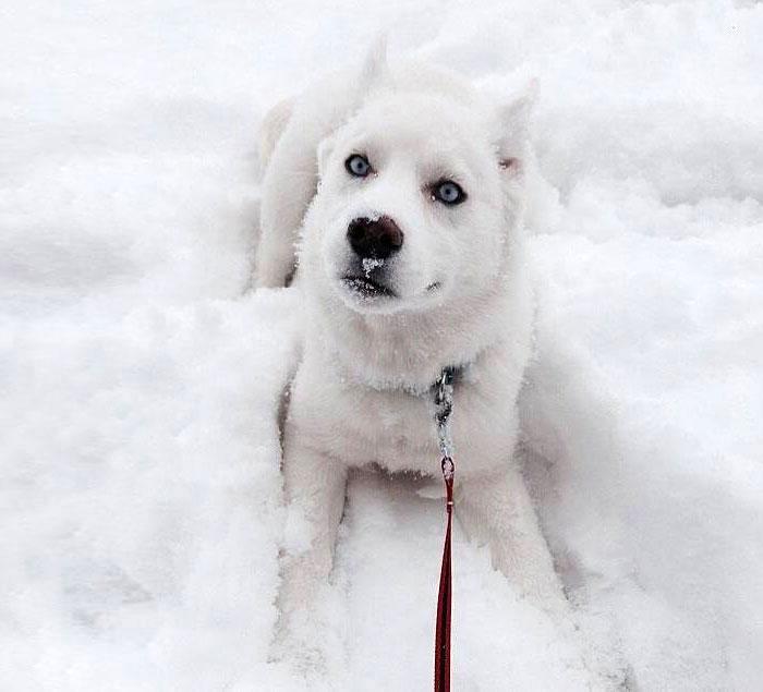 фото со снегом