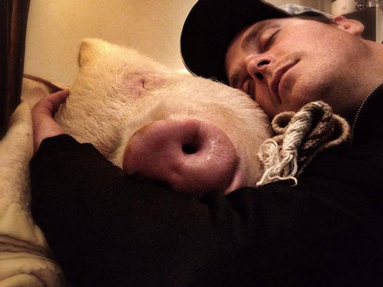 фото со свиньёй
