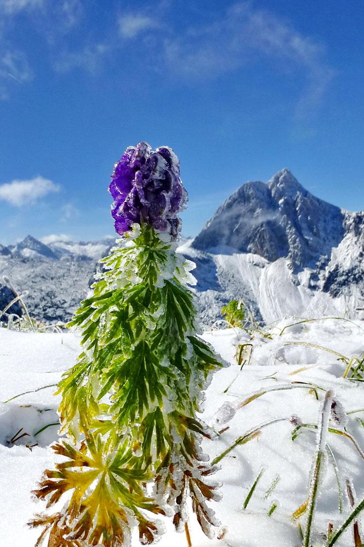 картинки зима снег