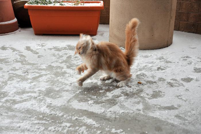кошка снег