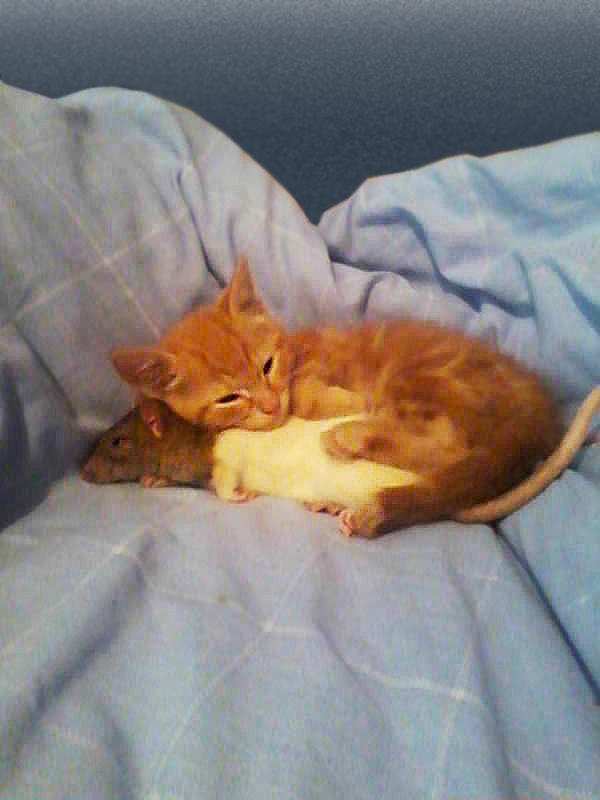 кошки лучшие друзья