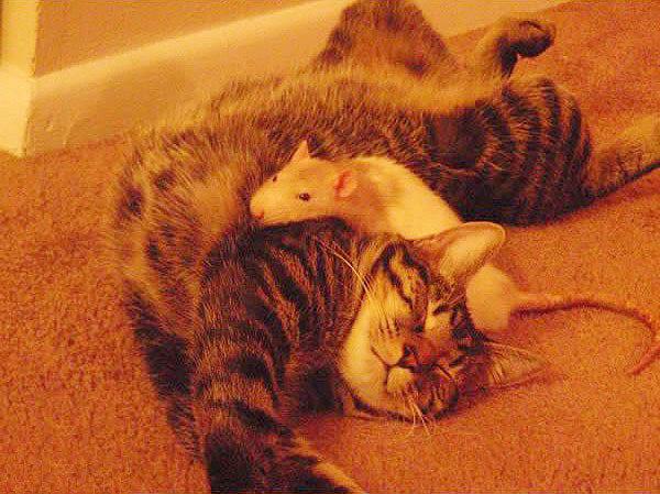 кошки мышки