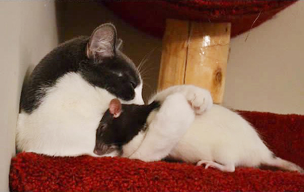 кот и мышь картинки