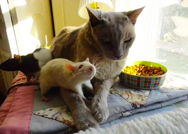 кот и мышка картинки