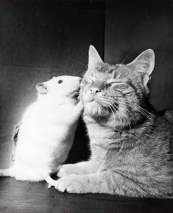 кот лучший друг