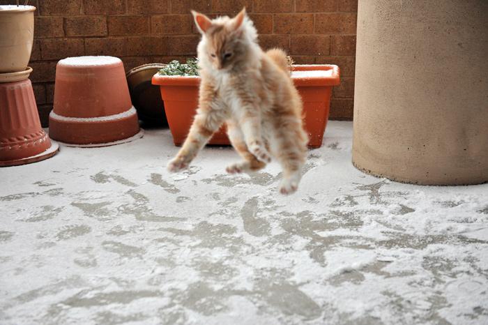 кот снег
