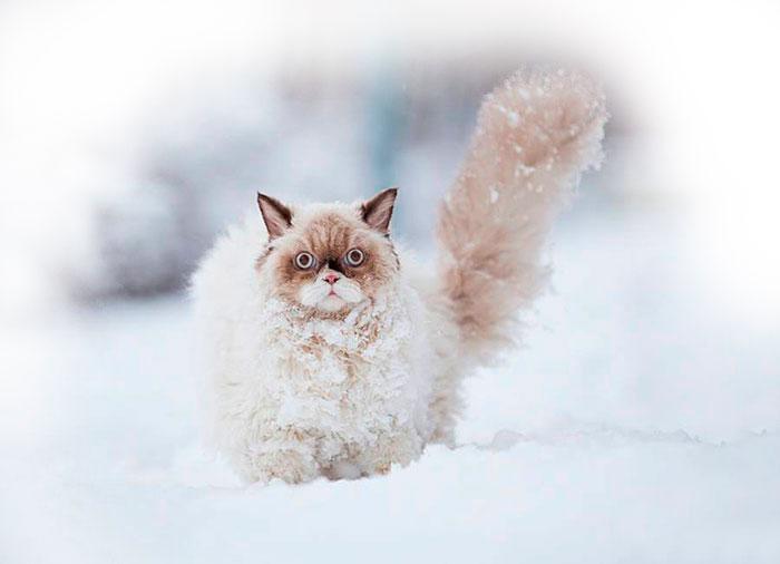 кот в снегу фото