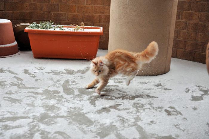 кот в снегу картинки