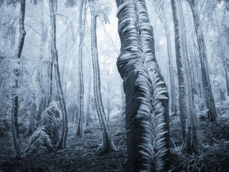 красивые картинки природа зимой
