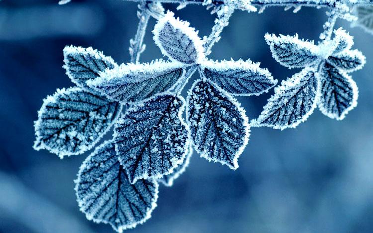 лучшие фото зимой