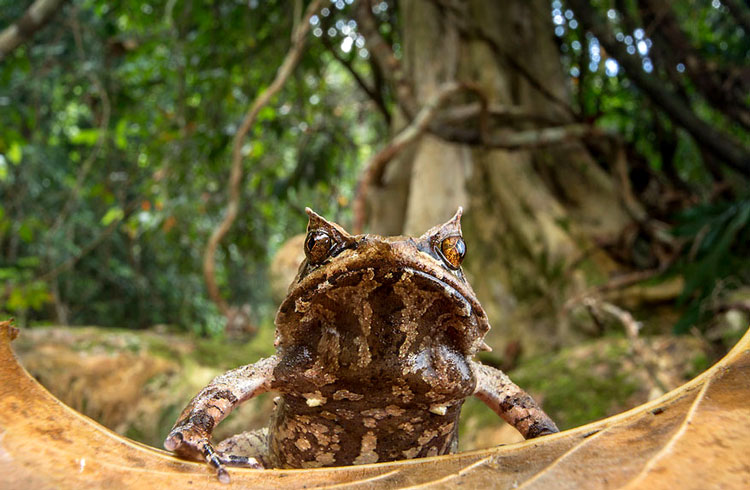 лягушки мира фото