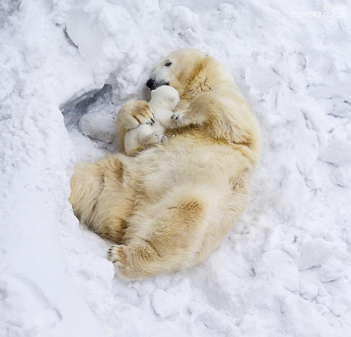медведь снег